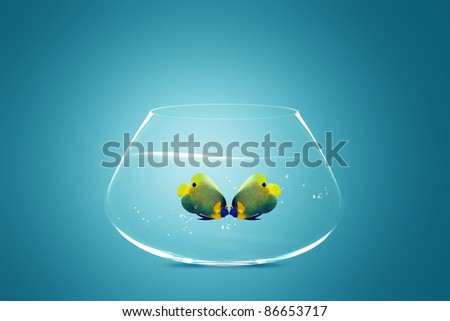 Two Angelfish in fishbowl falling in love, lose one's heart - stock photo