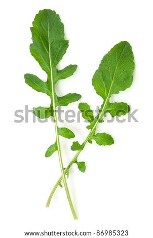 Two Arugula leaves on white background. isolated - stock photo