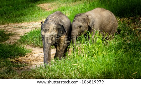 Two baby elephants walking playing in the field