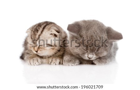 two baby kittens sleeping. isolated on white background
