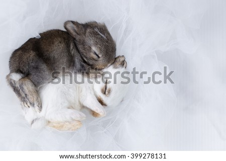 Two baby rabbits on light blue net - stock photo