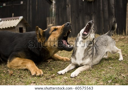 two barking dogs - stock photo