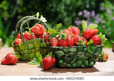 Two baskets of fresh ripe strawberries on the wooden table in the garden