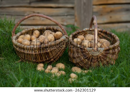 Two baskets of potatoes  - stock photo