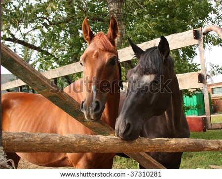 Two bay horses in the corral - stock photo