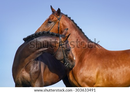 Two beautiful bay horse couple portrait against blue sky - stock photo