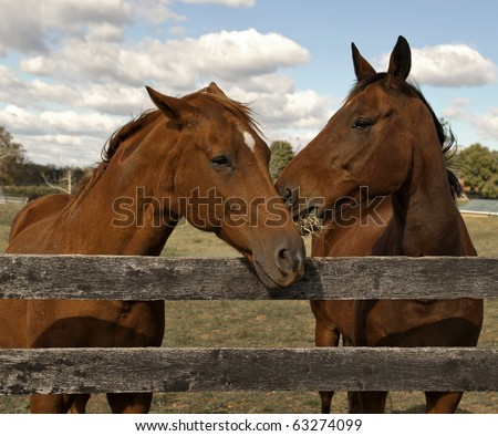 Two beautiful bay horses behind a farm fence surrounded by a blue cloud filled sky. - stock photo