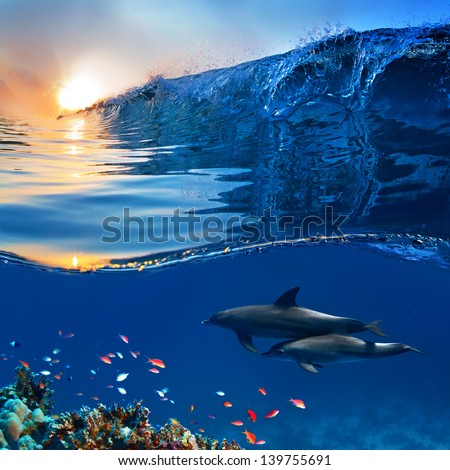 two beautiful dolphins swimming underwater through coral reef full of life with nice breaking wave - stock photo