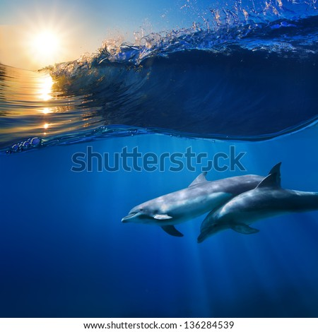 two beautiful dolphins swimming underwater through sunrays with breaking wave above - stock photo