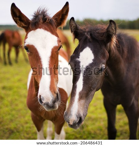 Two beautiful horse in nature - stock photo