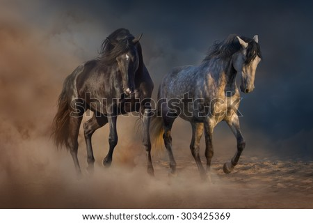 Two beautiful horse run in desert dust - stock photo