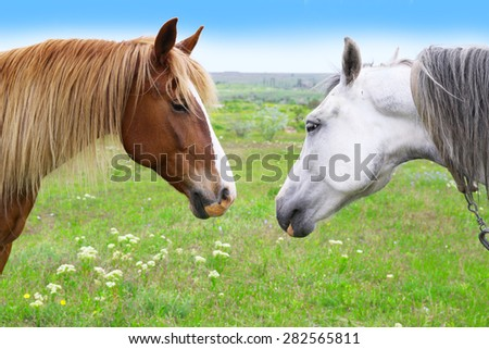 Two beautiful horses grazing on meadow - stock photo