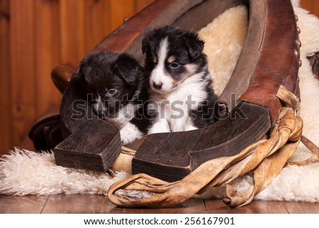 Two beautiful month old puppy sitting on sheepskin inside the old clamp - stock photo