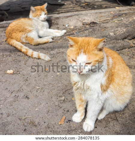 Two beautiful red cat - stock photo