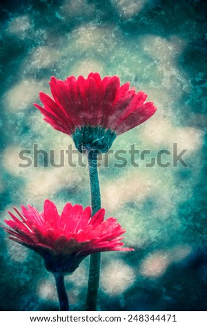 Two beautiful red gerbera. Retro aged photo with scratches. - stock photo