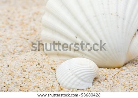Two beautiful sea shells close up on sand background - stock photo