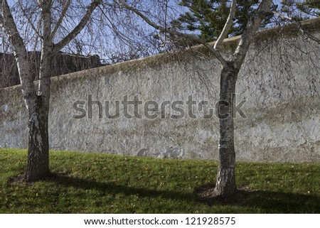 Two Beautiful trees against an old facade - stock photo