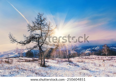 Two beautiful trees in the mountains at sunset. Winter landscape - stock photo