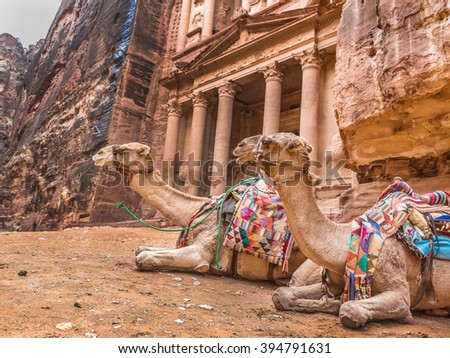 Two bedouin camels rests near the treasury Al Khazneh carved into the rock at Petra, Jordan. Petra is one the New Seven Wonders of the World - stock photo