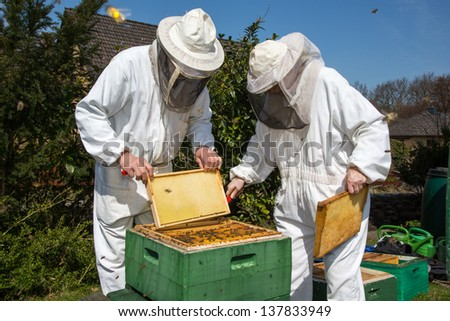 Two beekeepers maintaining beehive to ensure health of the bee colony or honey harvest - stock photo