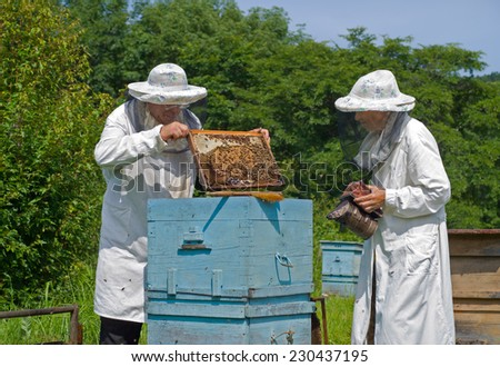 Two beekeepers work on an apiary. Summer, sunny day. - stock photo