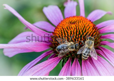 Two bees sitting on a flower - stock photo