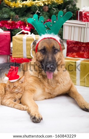 two best friends dog and cat in Christmas night - stock photo