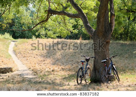 Two bicycles standing against acacia tree in the forest - stock photo