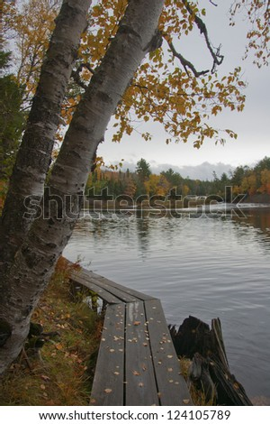 Two birch trees hang over a boardwalk by the water - stock photo