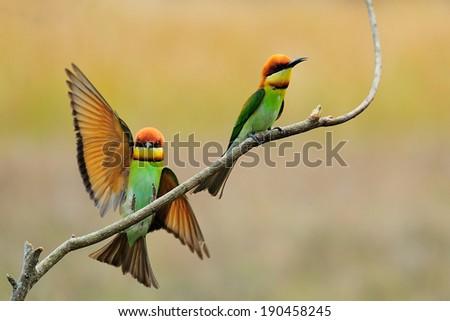 two bird - stock photo
