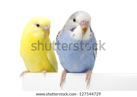 two birds are on a white background - stock photo