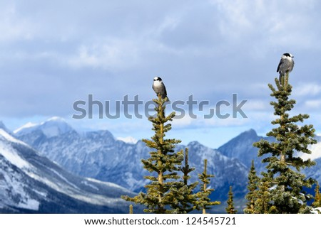 Two birds are standing on top of the tree background snowy mountain - stock photo