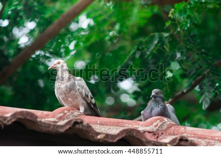 Two birds on roof. - stock photo