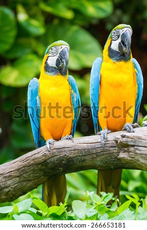 Two birds perched on a tree. - stock photo