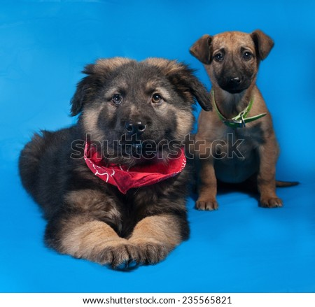 Two black and red shaggy puppy in red bandane lies on blue background - stock photo