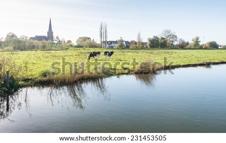 Two black and white cows grazing on the grass on the shore of a lake while in the background the contours of a small Dutch village are visible. - stock photo