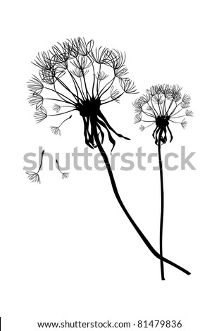 Two black dandelions,illustration - stock photo
