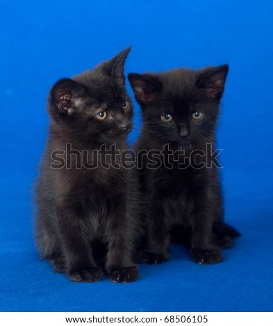 Two black kittens sitting on a blue background