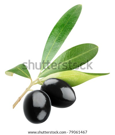 Two black olives on branch with leaves isolated on white - stock photo