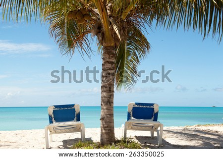 two blue sun lounges under palm tree