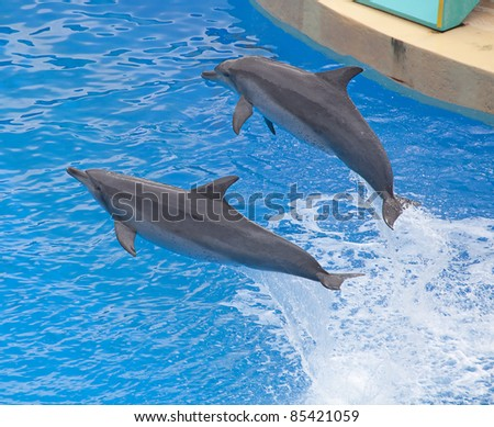 Two Bottlenose dolphin in the aquarium show - stock photo