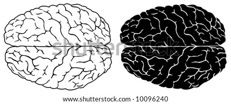 Two brains, normal and black white version - stock photo
