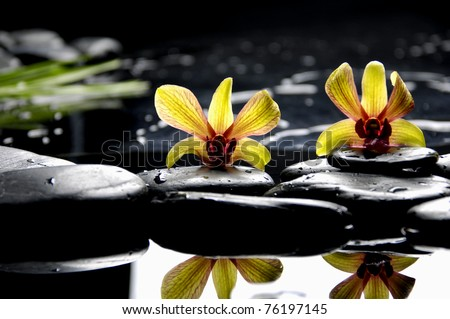 Two bright orchid and black stone with reflection - stock photo