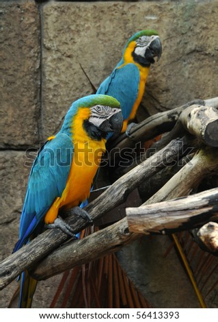 Two brightly colored parrots in the Amazon