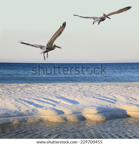 Two Brown pelicans Fly Over White Sand Beach with Tide Pool at Sunrise - stock photo