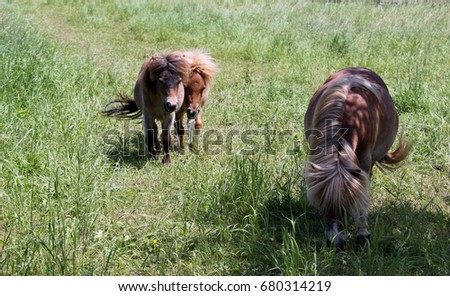 Two brown ponies in the open countryside
