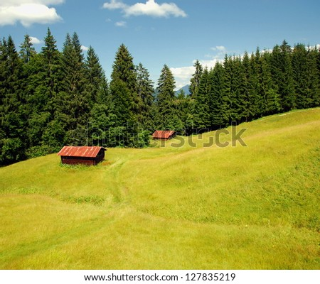 Two brown wooden hay barns on green meadow by forest in Alps on summer afternoon