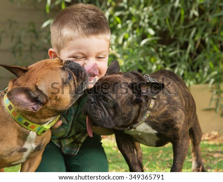 Two bulldogs licking little boy sitting outdoors - stock photo