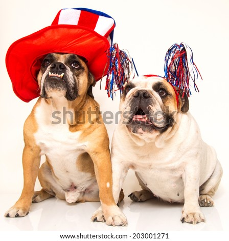 Two bulldogs posed for the 4th of July in their hats and headbands  - stock photo