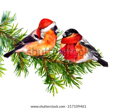 Two bullfinch birds in winter clothes (santa red hat and scarf) on pine tree.  Watercolor - stock photo
